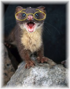 Weasel 2 glasses