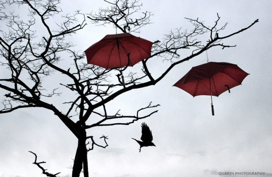 crow and umbrellas