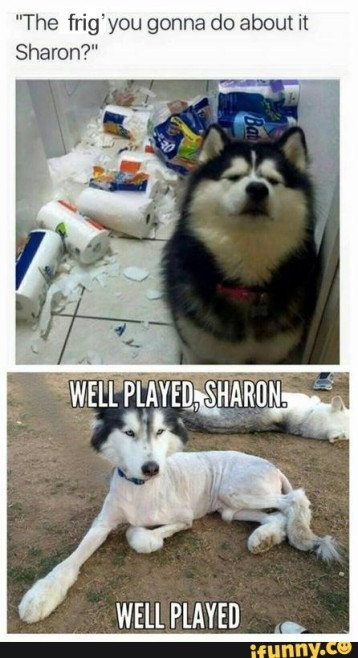 Well played sharon don't underestimate a woman dog
