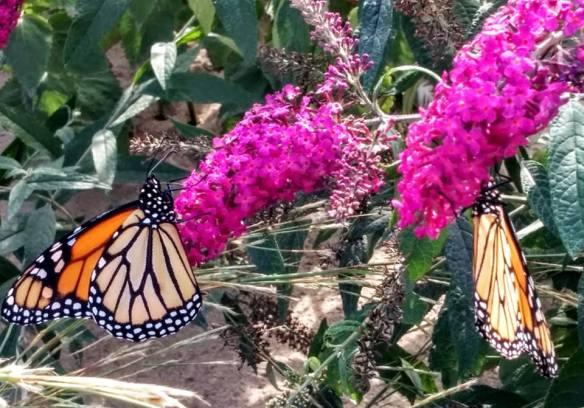 october-butterflies