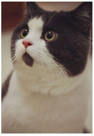 surprised-cat-3